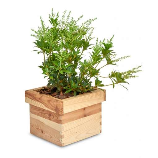 Small Wooden Square Flower Pot